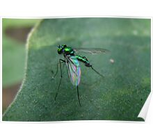 Green Metal Fly Poster