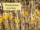 Thanksgiving Card - Dried Corn Stalks by MotherNature