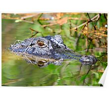 GATOR HEAD IN THE SWAMP Poster