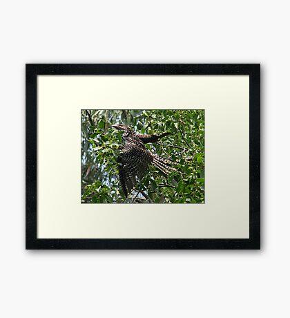 Cuckoo Framed Print