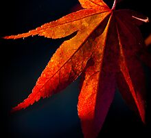Autumnal Acer II by Garry Copeland