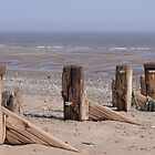 Old Groynes, Spurn, East Yorks by epgaskell