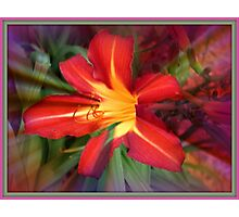 Fabulous Flower Photographic Print