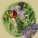 Butterfly on asters by Shubd