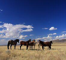 Desert Home by Gene Praag