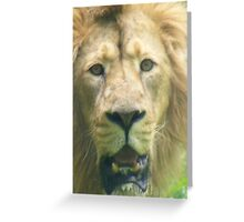 Old man of the jungle. Greeting Card