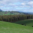 Tasmanian farmland  by gaylene