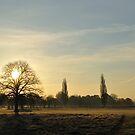 Park in sunlight by jonwhitehead