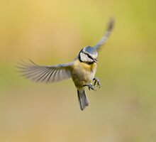 Blue tit ~ In flight by M.S. Photography & Art