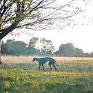 Dog in park by jonwhitehead