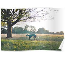 Dog in park Poster