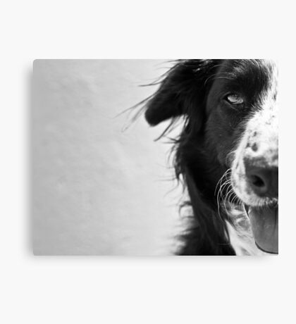 Half the dog Canvas Print