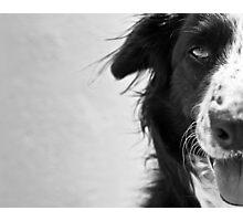 Half the dog Photographic Print
