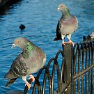 Lakeside Pigeons - South Norwood by John Hooton