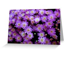 Purple Mums  ^ Greeting Card