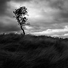 Of Sky, Tree and Grass by Kevin Skinner