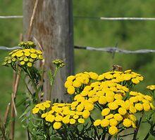 Yellow Landing Zone by Kathi Arnell