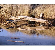 Petrified in Quinault  Photographic Print