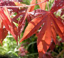 Rebirth,Spring growth in my Garden,Tumut,Australia. by kaysharp