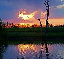 Twilight,Campaspe River,Elmore Victoria by Joe Mortelliti