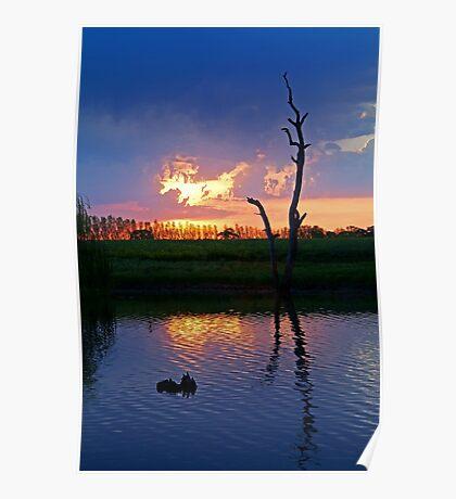 Twilight,Campaspe River,Elmore Victoria Poster
