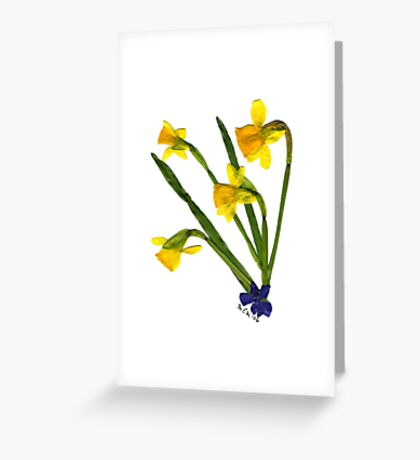 Spring Fling '06 - DAFFODILS Greeting Card