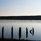 swans in silhouette on the fleet in weymouth,dorset by theonewhoisfree