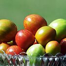 Tomato varieties in my garden by Bev Pascoe