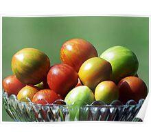 Tomato varieties in my garden Poster