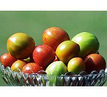 Tomato varieties in my garden Photographic Print