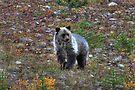 Bear cub by zumi
