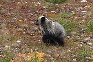 Bear cub II by zumi