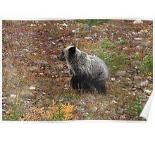 Bear cub II Poster