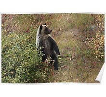 Bear cub III Poster