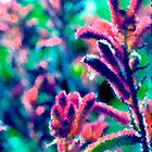 kangaroo paw by mmpaintings