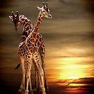 Sunset by Carol Bleasdale