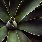 Plant In Abstract by Larry3
