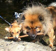 Two dogs in pool by stevenw888
