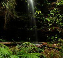 Rainforest by Martin  Hoffmann
