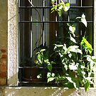 Window with Flowers in Venice by Michele Filoscia