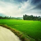 The Rice Bowl of Malaysia by Nisabutterberry