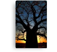 Boab by night Canvas Print