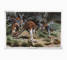 Friedrich Wilhelm Kuhnert A group of Red kangaroos on the move Colour reproduction of Wellcome Baby Tee