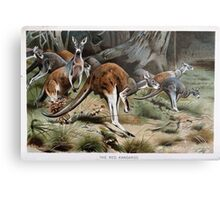 Friedrich Wilhelm Kuhnert A group of Red kangaroos on the move Colour reproduction of Wellcome Metal Print