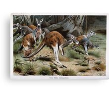 Friedrich Wilhelm Kuhnert A group of Red kangaroos on the move Colour reproduction of Wellcome Canvas Print