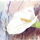 ARUM LILY (Zantedeschia aethiopica) by Maree  Clarkson