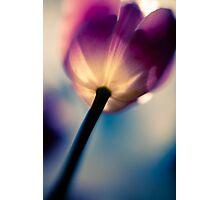 Surreal Tulip Photographic Print