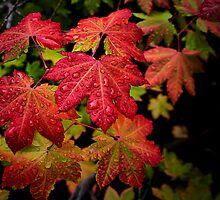 Fall Delight by Charles & Patricia   Harkins ~ Picture Oregon