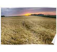 The Wheat Field at Sunset Poster