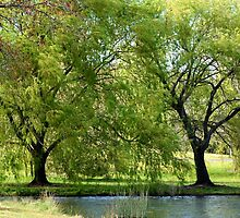 Willows on the Lake by anneisabella